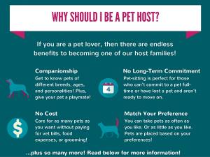 become a pet sitter pets are inn