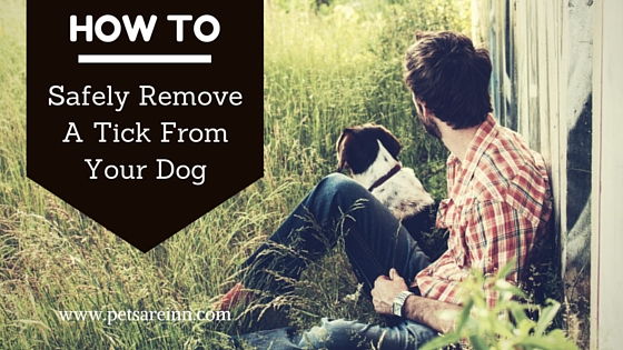 Tick removal Dog